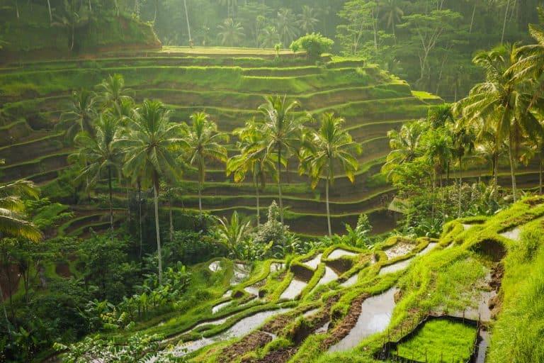 Tegallalang Rice Terrace bali must visit