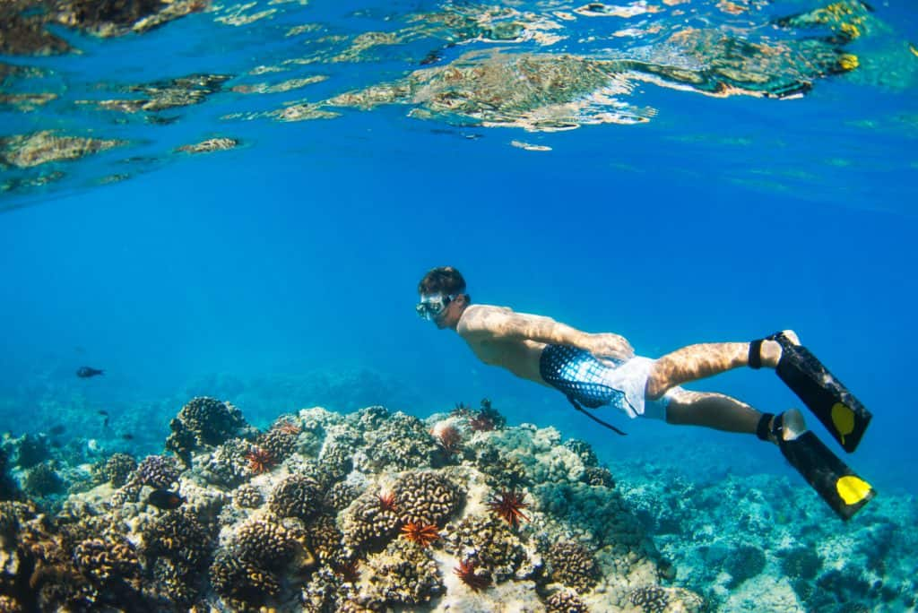 Young Man Snorkeling Underwater over Tropical Reef in Hawaii