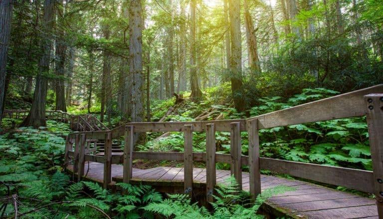 pacific rim national park Rainforest