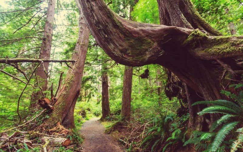 trail at Pacific Rim National Park bc