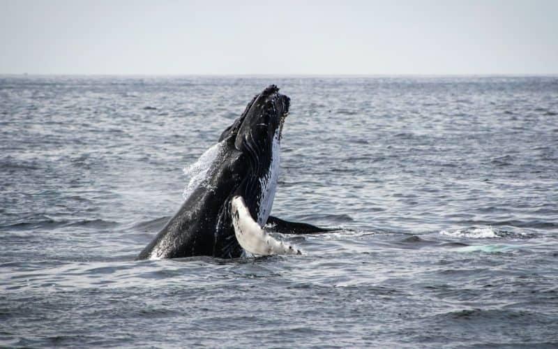 whale watching tofino bc