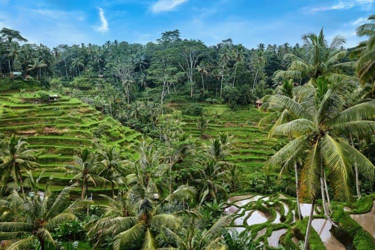 Rice Terrace at Tegalalang in Bali