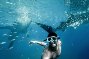 man swimming with sharks